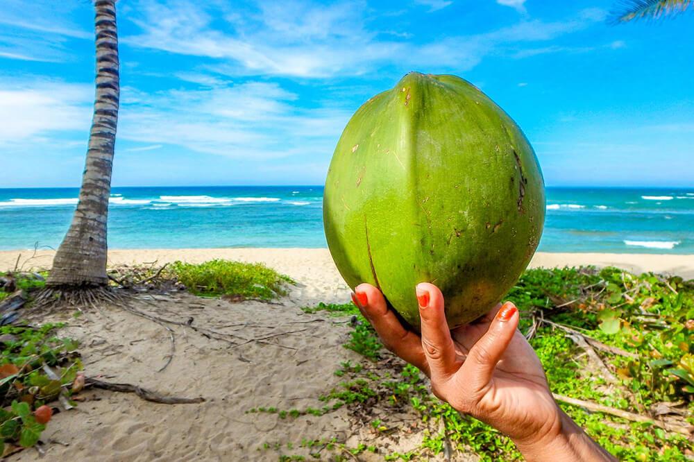 Nước dừa được xem là một loại thức uống rất tốt mà còn từ thiên nhiên