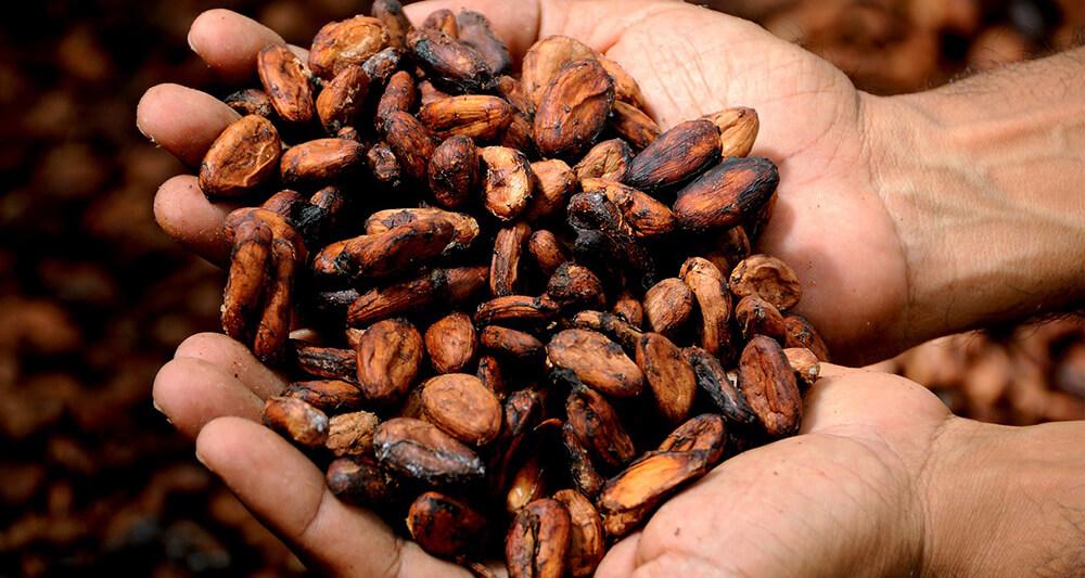 5 lợi ích từ Cacao mang đến cho cơ thể, tâm trí và tinh thần của bạn
