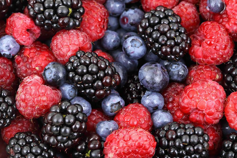 quả việt quất cũng được xem là loại quả mọng siêu dinh dưỡng
