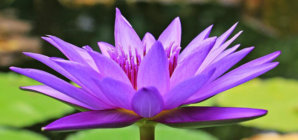 Những điều cần biết khi thực hành Thiền cho người mới bắt đầu
